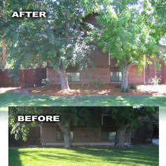 Before and After Project Spotlight