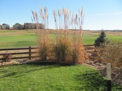 Plume Grass Example