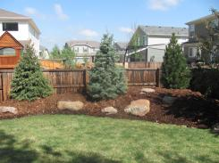 Berm - Left to Right…Black Hills Spruce, Concolor White Fir, Emerald Arrow Bosnian Pine