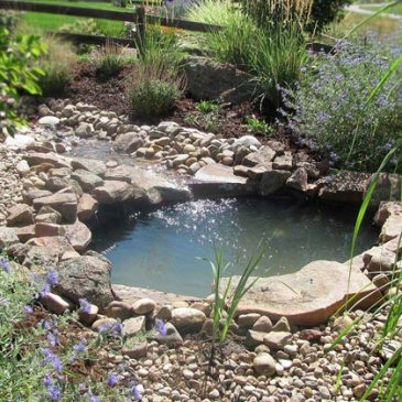 Glacier view landscape and design inc providing for Koi pool thornton