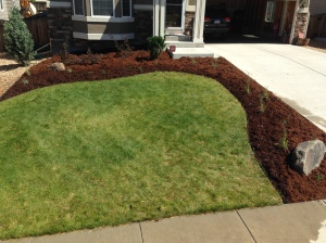 Front Yard Landscaping makeover