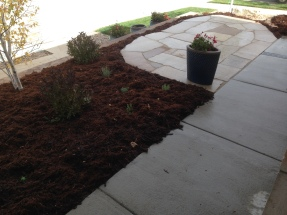 Erie, CO Front Entrance with Perennials