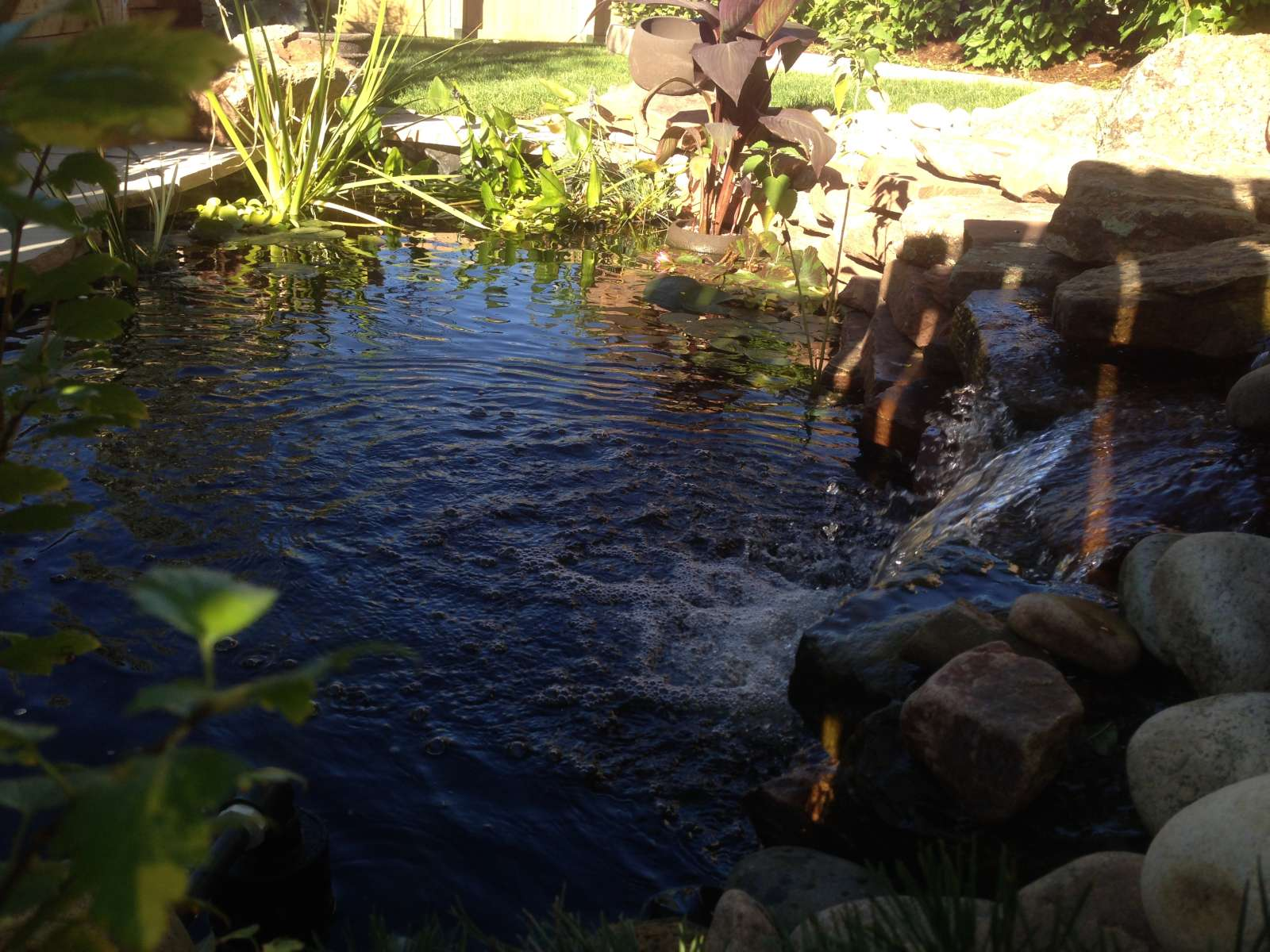 Koi pond and waterfall glacier view landscape and design for Koi pool thornton