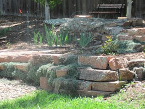 Plant of the Month for Boulder landscapes