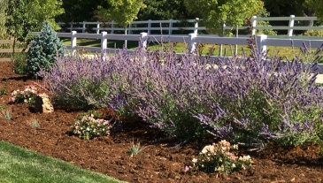 Longmont Colorado area landscape design and installation service