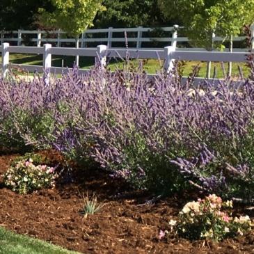 Longmont Colorado area landscape design and installation service