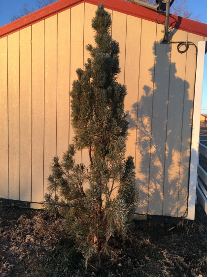 Plant of the month for Boulder Colorado landscapes