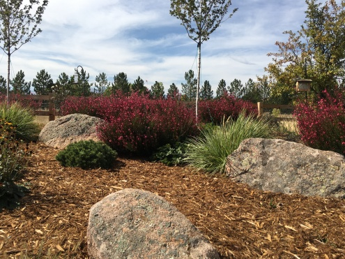 Lafayette Colorado garden design with flowers-Whirling Butterflies add color