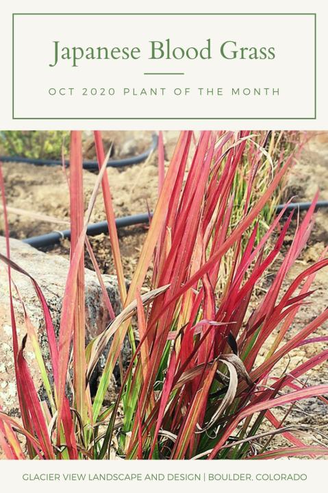 Boulder Colorado landscapes- plant of the month