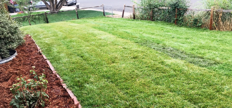 New Sod Longmont Colorado Jungle Yard put in Landscape Makeover-service