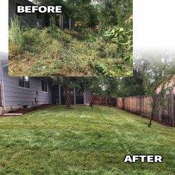 Jungle After-Longmont Colorado landscaping contractor