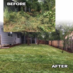 Jungle After-Longmont Colorado landscaping contractor
