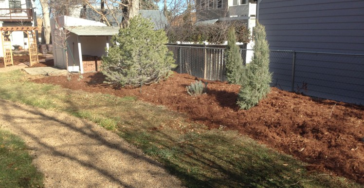 February 2021: Trees and Shrubs Winter Watering Boulder Colorado landscapes - Plant of the Month Series