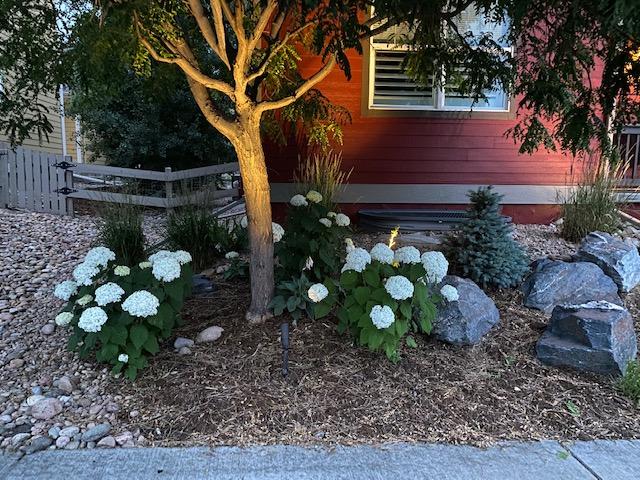 Gunbarrel-COLORADO-Beautiful Hydrangeas-landscaping